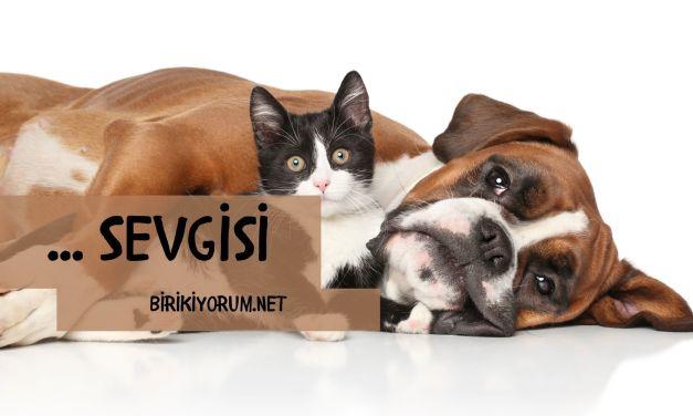 Hayvan Sevgisi Kedili Kadınlar ve Köpekli Adamlar