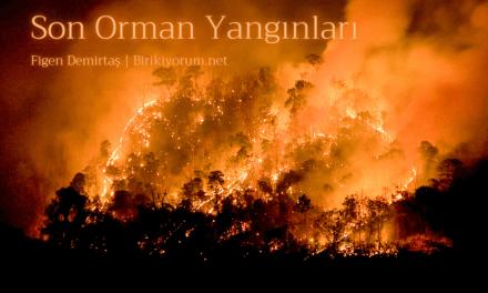 Son Orman Yangınları