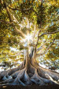 Yaşam Ağacı Efsanesi