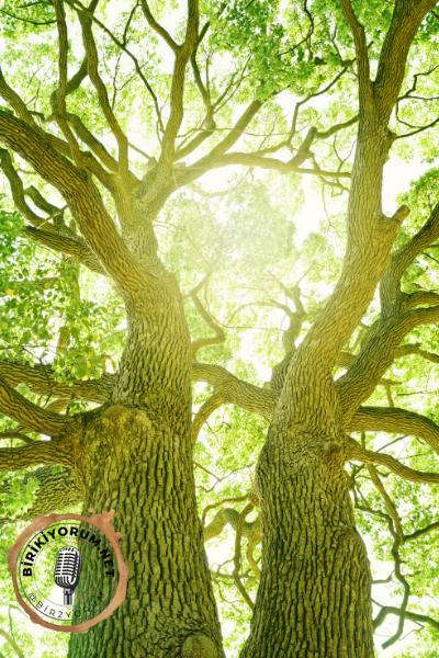 Ağaçlar yaşatır