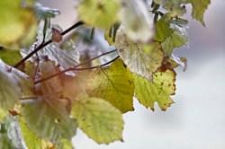 Bild: Blätter einer Buche im Spätherbst im Einetal bei Stangerode. Manueller Modus mit Blende f:6,0 und Brennweite 350 mm. Belichtungszeit 1/40 Sekunde. ISO 1600.