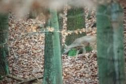 Bild: Reh im Wald bei Bräunrode. NIKON D700 mit SIGMA 150-500mm F5.0-6.3 DG OS HSM.