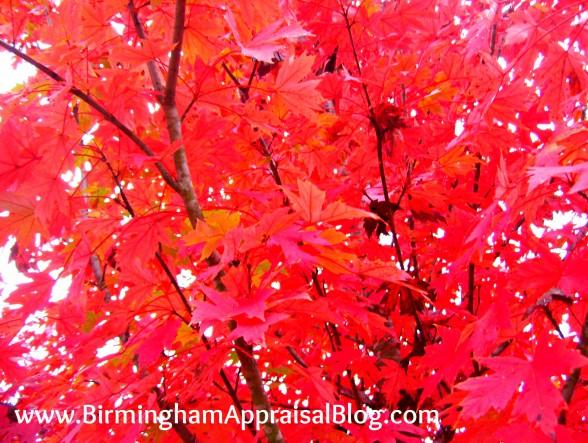 Birmingham in the fall