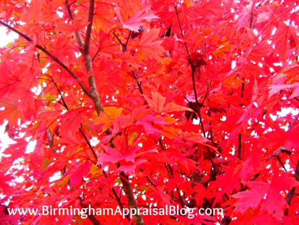 Birmingham in the fall