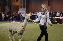 British Alpaca Futurity_NEC_150313 (039)