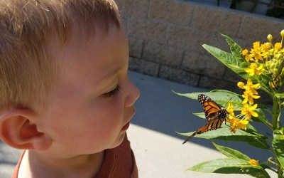 small-child-looking -at-a-butterfly-close-up