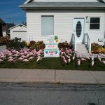Cake Lawn Signs with Flamingos Niagara Falls