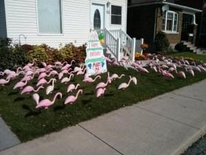 Pink Flamingos guelph