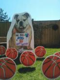 bulldogbasketballs