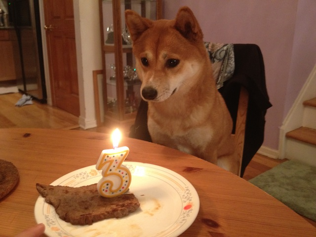 Cute Animals Eating Birthday Cake Or Just Celebrating Their Birthdays Birthday Songs With Names