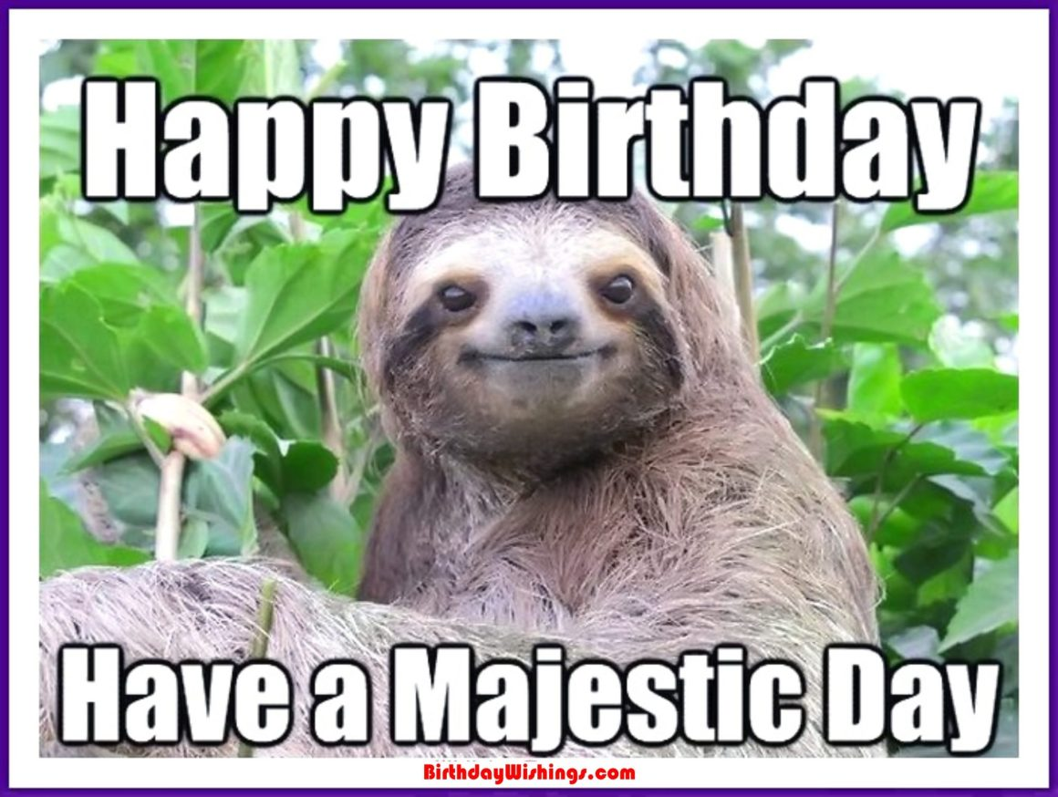 Funny Happy Birthday Memes With cats, Dogs & Funny Animals - photo#31