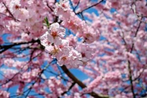Pink flower blossoming from tree