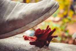 gray shoe near red rose