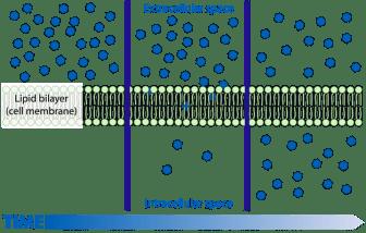 difusi sel