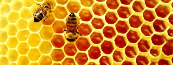 Manfaat sarang lebah