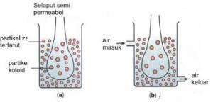 koloid dialisis