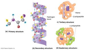 Pengenalan Metabolisme Gizi Dengan Ilmu Kimia