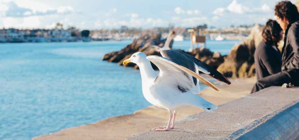 Reproduksi pada burung