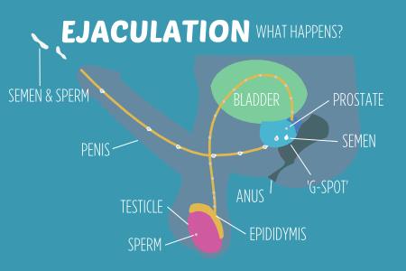 Action the Ejaculation vagina inside