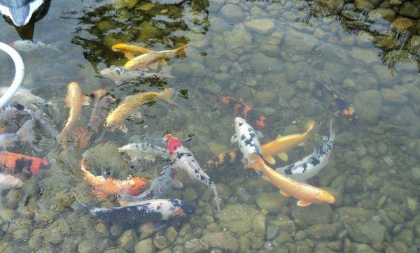 Preko stranice za upoznavanje ribnjaka