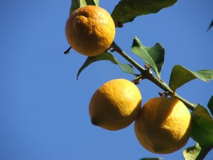 Unlike money, lemons do grown on trees.