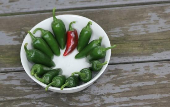 Garden Jalapeno peppers