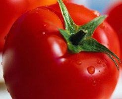 マイニングでトマト栽培