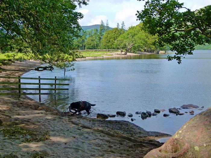 Ullswater, dog, Cumbria
