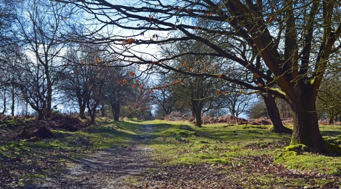 Cannock Chase, Staffordshire, West Midlands