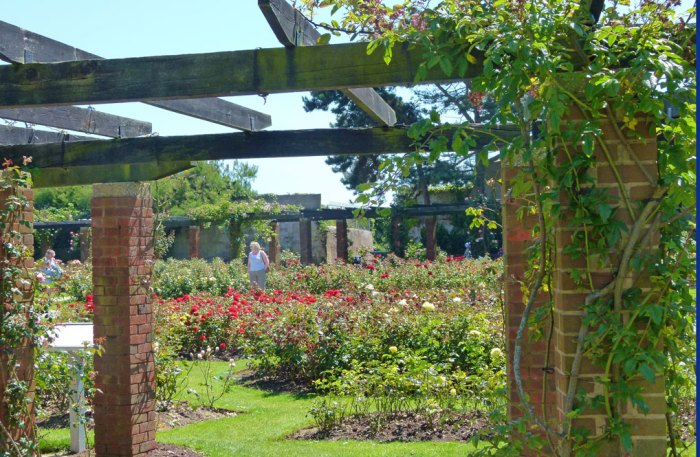 Rose garden, Southsea, Portsmouth, Hampshire
