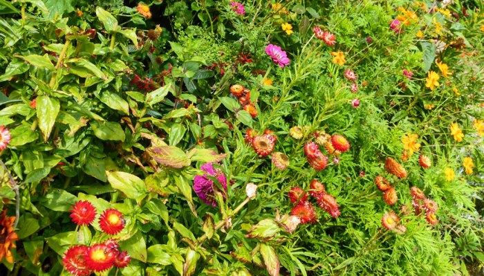 Tintinhull Garden, Somerset