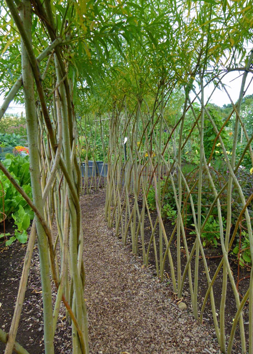 Willow-wand lined path, Harlow Carr, Yorkshire Garden