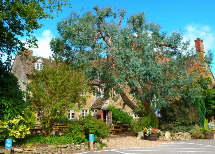 Red Lion, Lackock, the garden with eucalypyus
