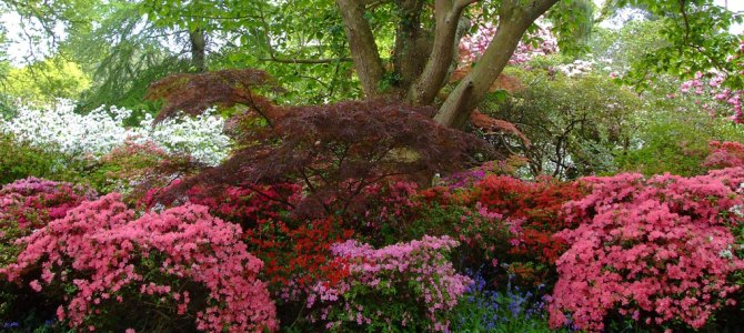 Blooms and a mystery at Exbury Gardens