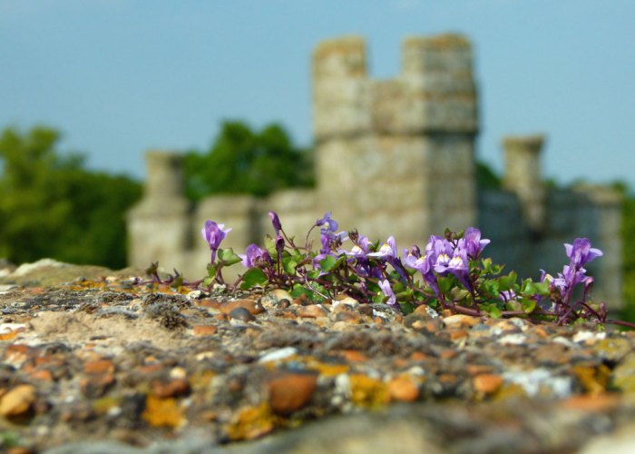 Bodiam, Castle, flowers, romantic, Sussex