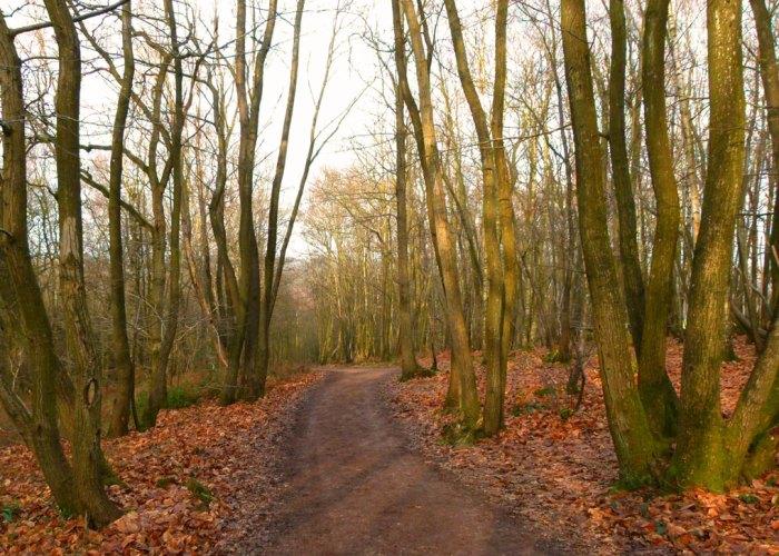 Winnie-the-Pooh, Ashdown Forest
