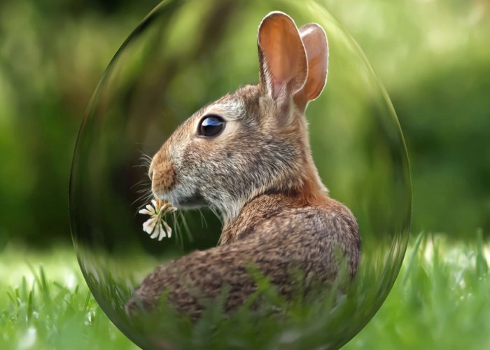 Easter bunny, Easter hare