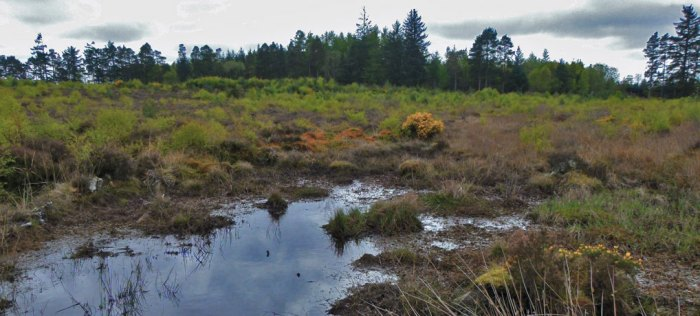 Culloden, unsuitable ground, The '45