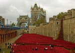 Poppies, Tower of London, Blood Swept Lands and Seas of Red