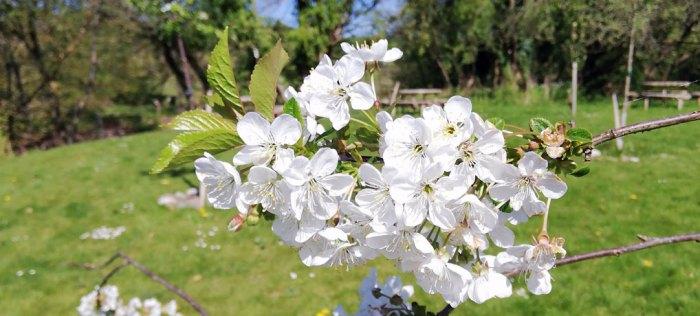 Spring, Britain, blossom