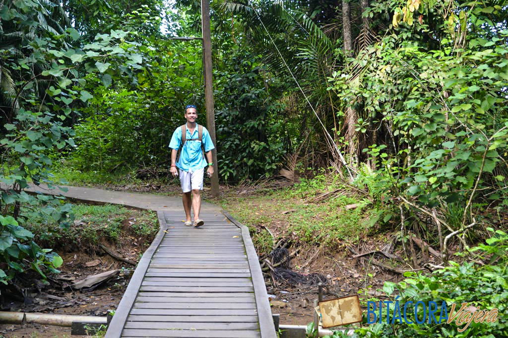 Parque Nacional Bako - Borneo Malasia (2)