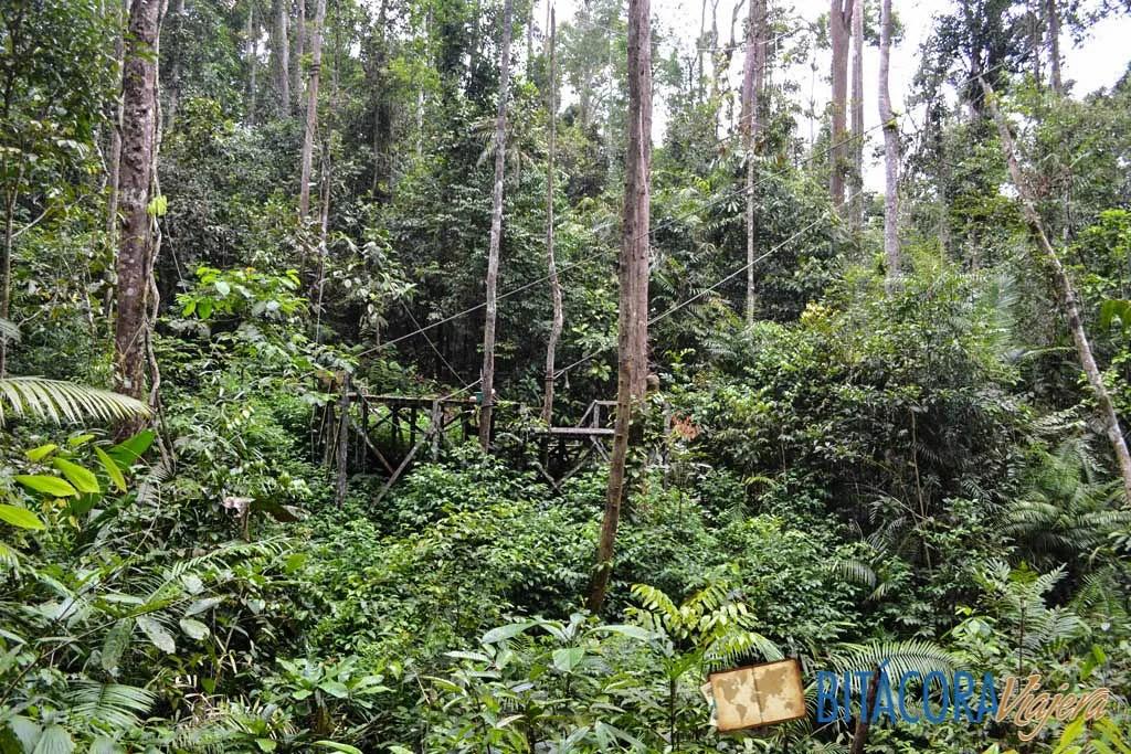 La pasarela donde alimentan a los orangutanes