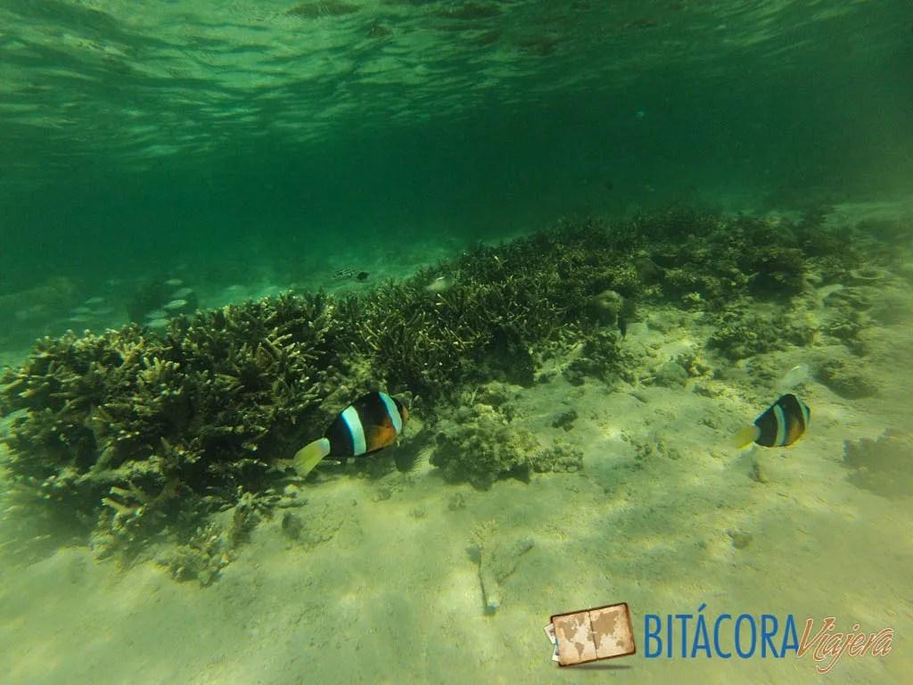 Kota Kinabalu y las playas de Borneo (11)