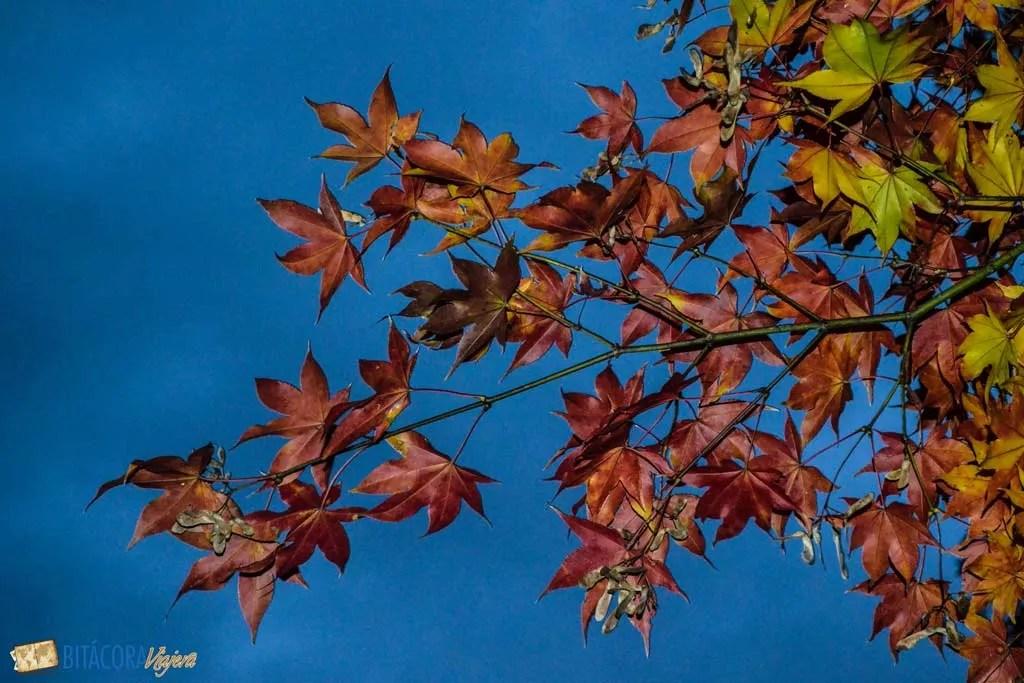 otoño en kyoto japon
