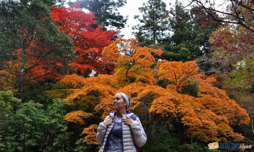 otoño en miyajima island japon