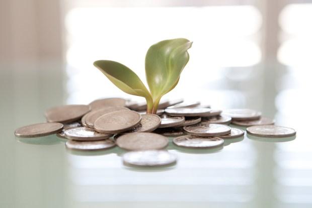 """Money Plant"" von  Tax Credits via flickr.com. Lizenz: Creative Commons"