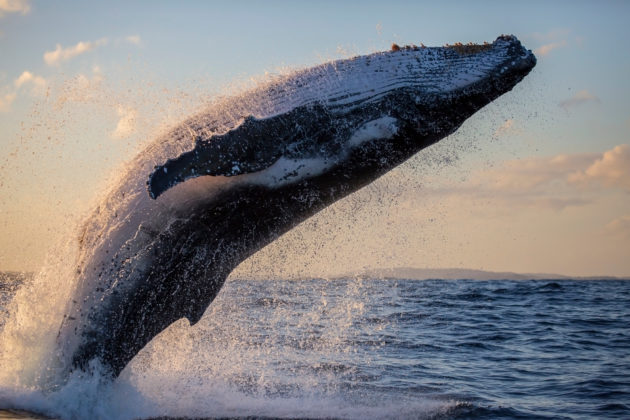 shutterstock_777856885-630x420 Chainalysis Finds That Bitcoin Whales Are Not the Sole Source of Market Volatility