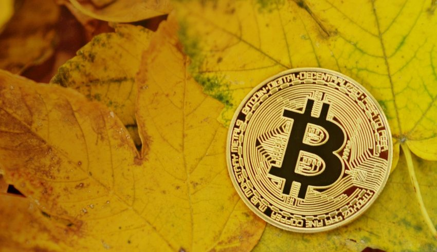 Bitcoin Rides on USD 8,000 as Bulls Ignore Bear Signals