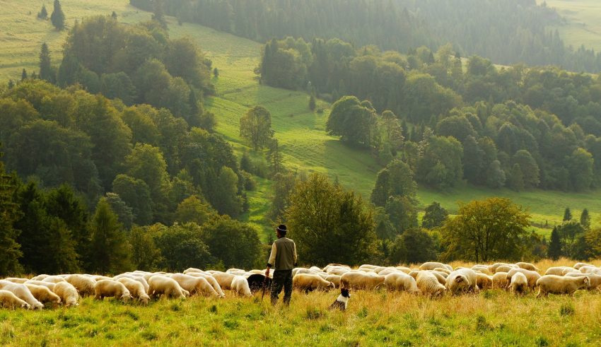 Sri Lanka Gets Blockchain for Agricultural Insurance