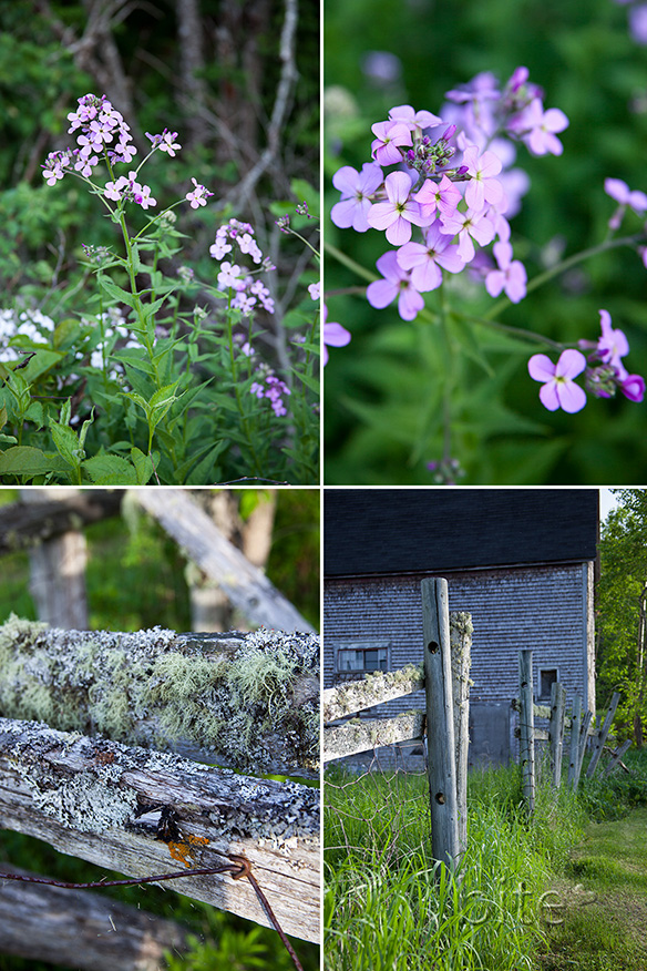 wild flowers and old barns
